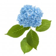 Декоративни растения Култура